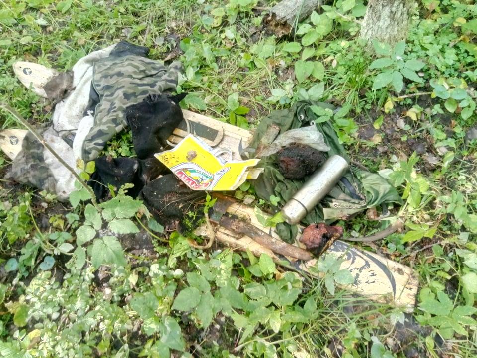 В Кировской области медведь задрал человека: в лесу найдены останки