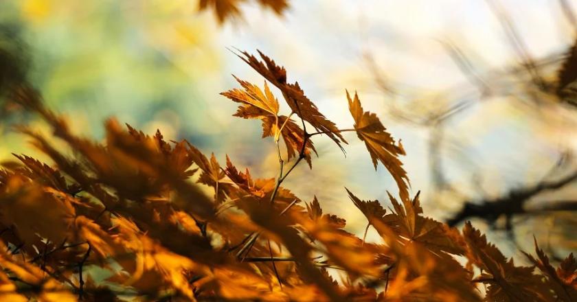 ветер осень