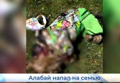 В Кирове собака напала на женщин с колясками и насмерть загрызла терьера