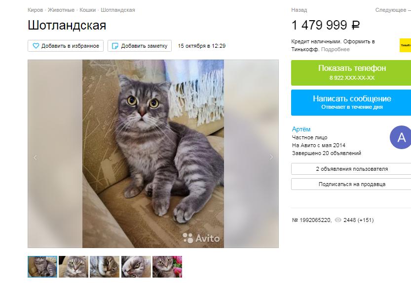 Кировчанин «наделил» кошку волшебством, чтобы продать за 1,5 млн рублей