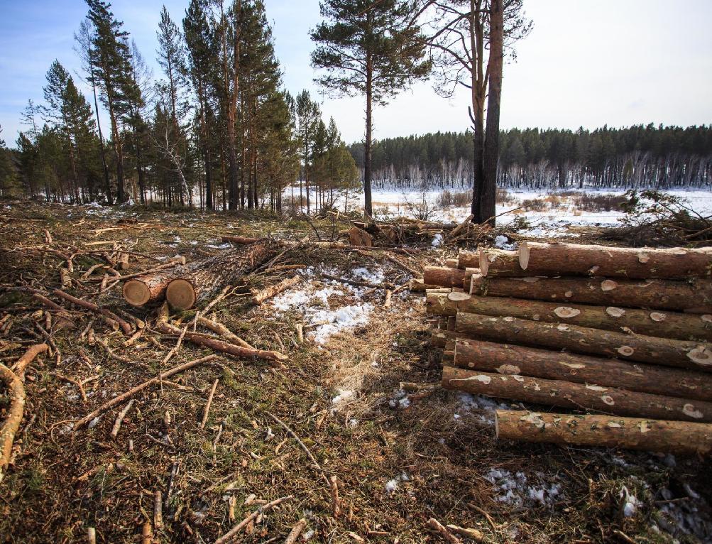 В Кировской области незаконного рубка леса